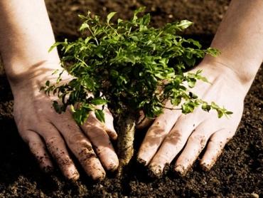 Ağaç Nasıl Dikilir